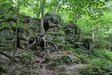 "Click to view ""tree roots and rock walls"