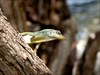 Lizard #1 log image