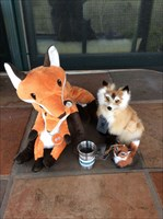 Tincup Chillin' with the Foxes!