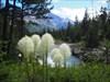 Beargrass at Boundary Creek