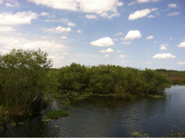 A nice view of the Everglades. Photo by geocacher JunglePete.