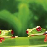 frogsaunt