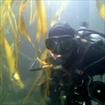 Cache Diver