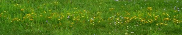 Květiny na louce nad mokřadem