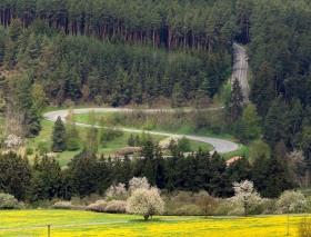 Serpentiny vúdolí Kosového potoka