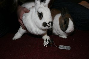 my rabbits and the Travel bug