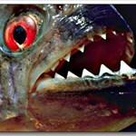 pissedfish