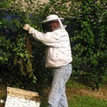 Bee-man