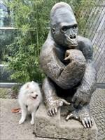 Moa und der Gorilla