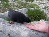 mutiger Vogel
