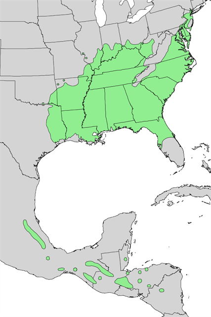 GCZZ Florida Sweetgum Traditional Cache In Florida United - Us government tree map