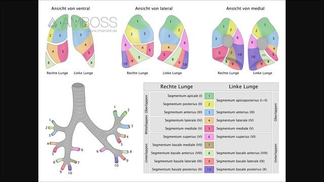 GC6TH1V Anatomie #1 (Unknown Cache) in Aargau, Switzerland created ...