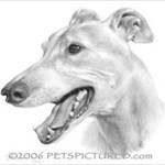 Grizzledgreyhound