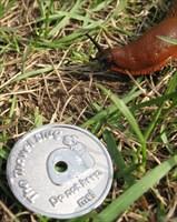 Limace and real HUGE slug!!