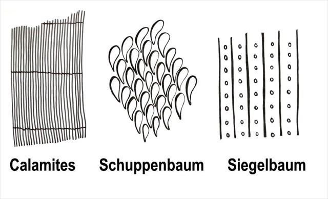Rinde von Bäumen aus der Steinkohlenzeit, Abbildung: GeoPark Ruhrgebiet