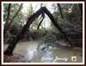 Árvore sobre o rio... log image