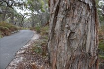 South Straddie GeoTour Gallery