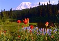 Visit Rainier Centennial GeoTour Gallery