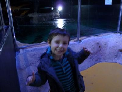 devant les requins