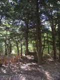 Image for Trail Tree - Lake Michigan Recreation Area