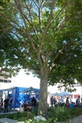 Image for Tree Dedicated to Earthquake Victims - Christchurch, Canterbury, New Zealand