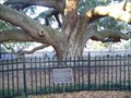 Image for The Baranoff Oak - Safety Harbor, FL