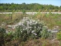 Image for Wildflowers of Wekiwa are Florida's fall colors, thanks to controlled burns