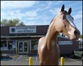 Image for Socks the Horse at Western Feed, Orangevale, California 95662