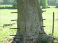 Image for Iron hungry tree - Pinnaclehill Plantation, Great Offley, Hertfordshire, UK