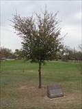 Image for Stephen F. Austin Oak - Getzendaner Park - Waxahachie, TX