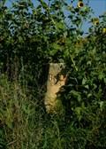 Image for BOD marker in Ellis county on US 183