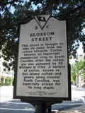 Image for Blossom Street (40-78)