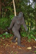 Image for Forest through the trees(Sasquatch), Fairchild Tropical Botanic Garden - Miami Florida