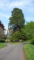 Image for Acorn Bank Redwood, Temple Sowerby, Cumbria