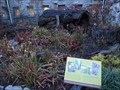 Image for Franklin Park Conservatory Carnivorous Plants - Columbus, OH