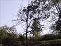 Image for Tour de Tree - Bentonville AR