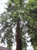 Image for Capitol Park Sequoia - Sacramento, CA
