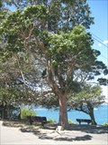 Image for Tree Dedicated to the crew of H.M.A.S. Sydney, Bradleys Head, NSW Australia