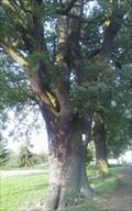 Image for Old Oak - Miesenheim, Rheinland-Pfalz, Germany