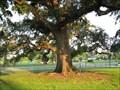 Image for Magnolia Mound Bicentennial Oaks - Baton Rouge, Louisiana