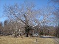 Image for The Pawling Sycamore - Valley Forge, PA