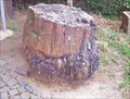 Image for Petrified Conifere Tree Trunk