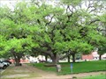 Image for The Hanging Tree - Goliad, TX