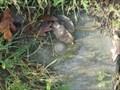 Image for RD Meetpunt: 58933914 - Maasgouw