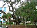 Image for Historic Maltby Liveoak ~ Palatka Florida