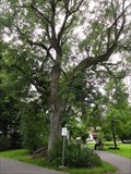 Image for Friedenslinde/Peace Linden Tree - Oberstdorf, Germany, BY