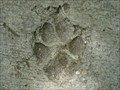 Image for Dog Prints in Kanapaha Botanical Gardens - Gainesville, FL