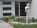 Image for Cat Letterbox, Orr St, Port Macquarie, NSW, Australia