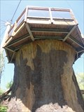 Image for Toronto Zoo Treehouse  -  Toronto, Ontario