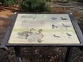 Image for Waterfowl  -  San Jose, CA